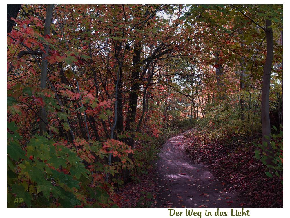 Herbstliche Impression (8)