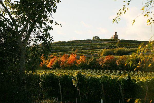Herbstliche Impression an der Weinstraße - Blick zum Flaggenturm -