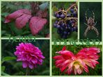 Herbstliche Impressionen