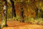 Herbstliche Impressionen - Erinnerung