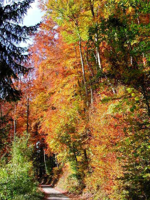 Herbstliche Inspiration