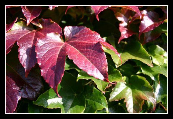 Herbstliche Laubverfärbung