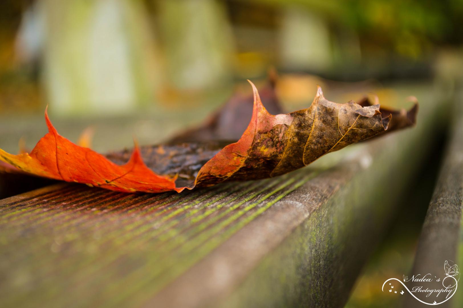 Herbstliche Momente