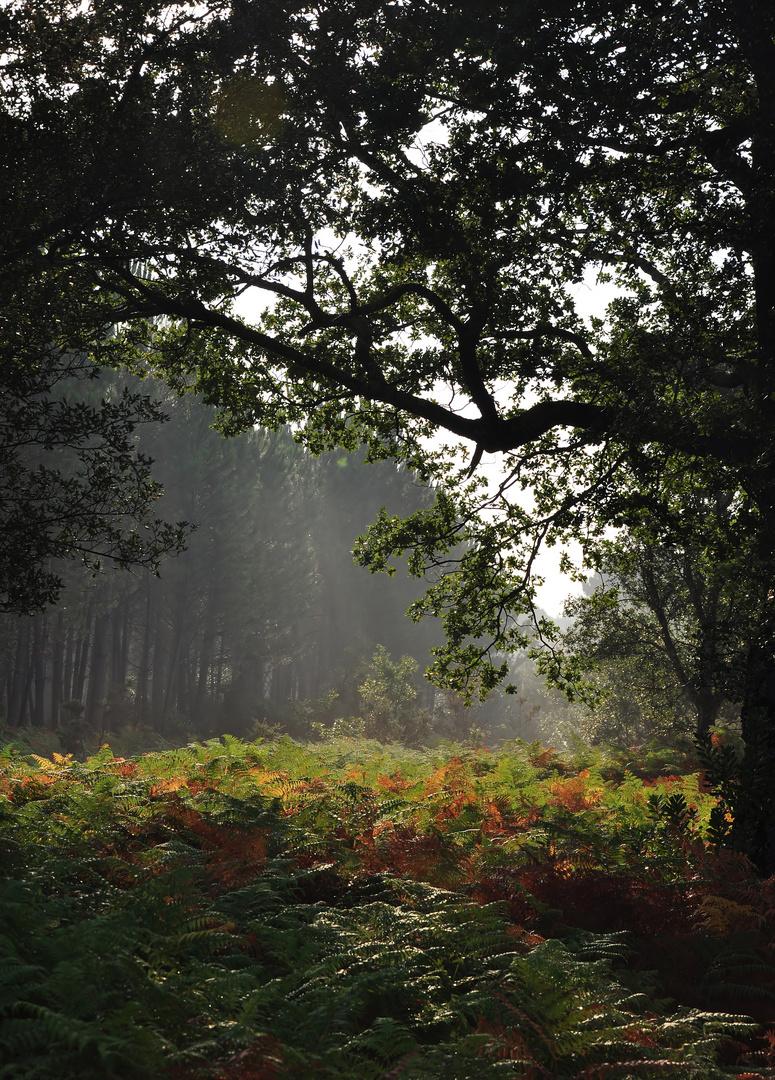 Herbstliche Nebelschwaden