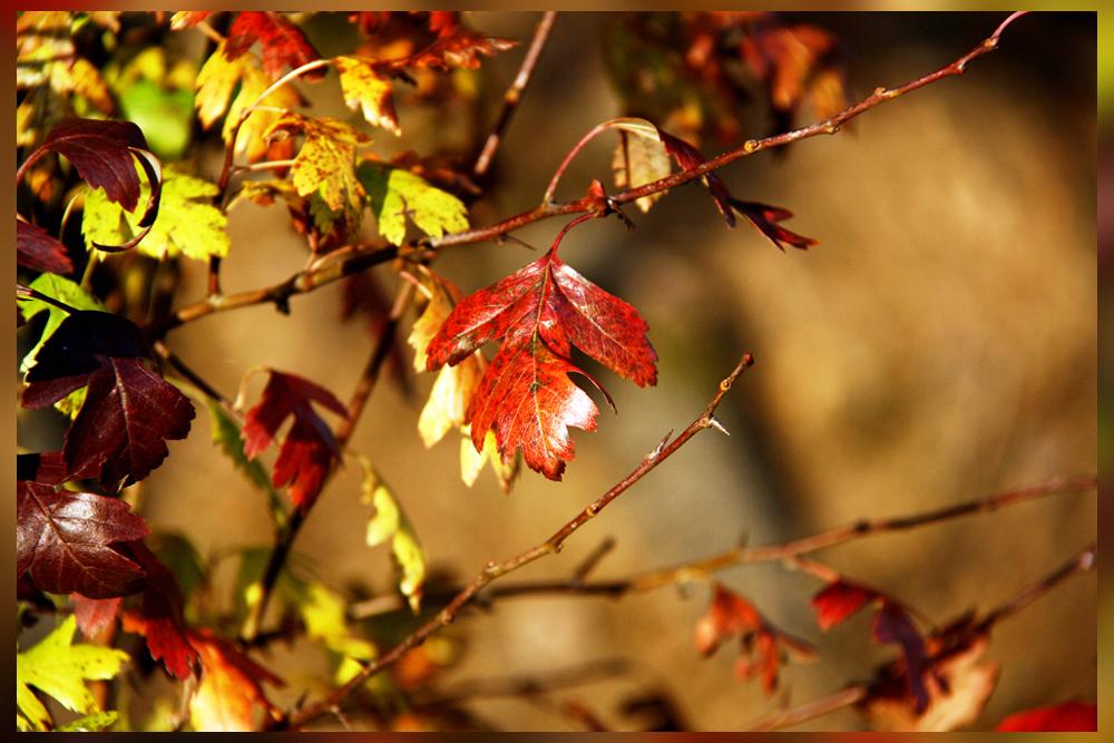 Herbstliche Palette