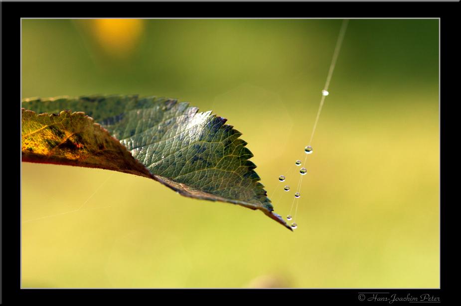 Herbstliche Perlenkette