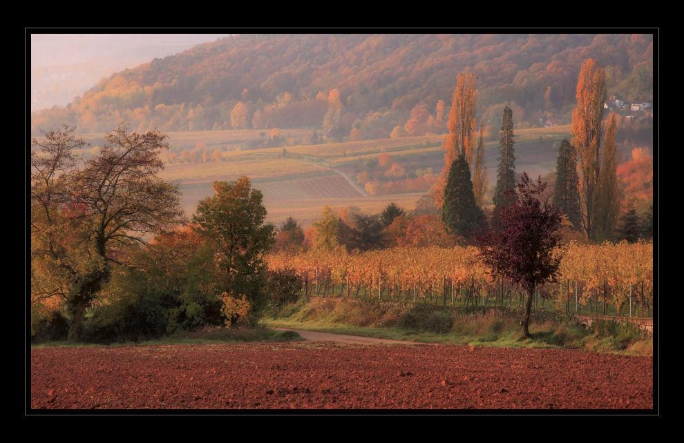 Herbstliche Pfalz