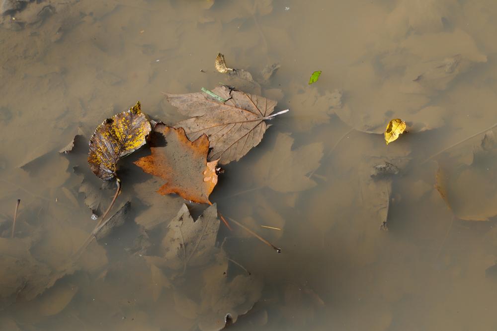Herbstliche Pfütze
