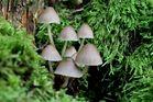 Herbstliche Pilze im Wald