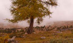 Herbstliche Plätzwiese