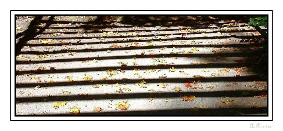 Herbstliche Schattenspiele