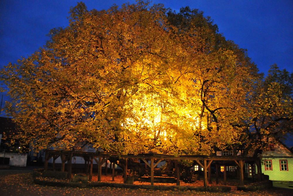 Herbstliche Stimmung an der ältesten Linde Deutschlands