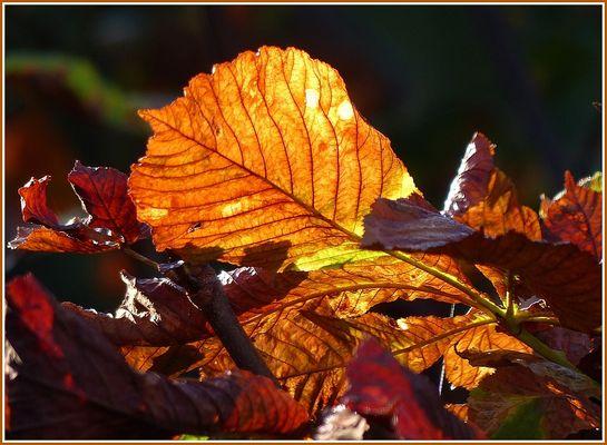 Herbstliche Wärme