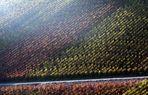 Herbstliche Weinberge…