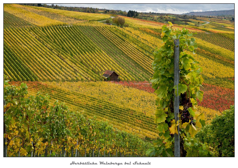 Herbstliche Weinberge bei Schnait 2
