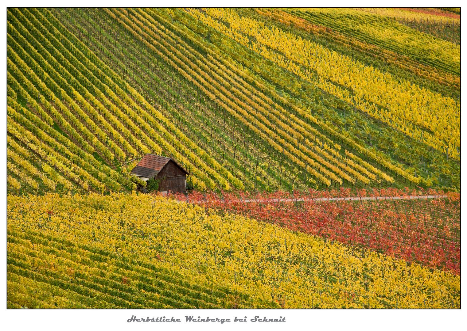 Herbstliche Weinberge bei Schnait