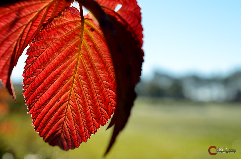 Herbstliche Zeit...