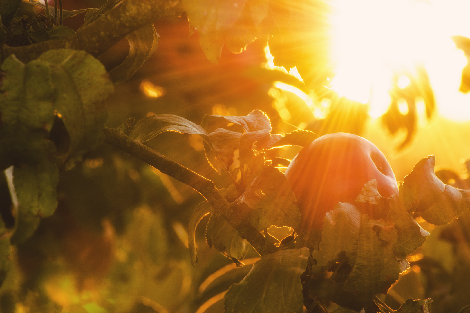 Herbstlicher Apfel