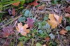 Herbstlicher Blätter Salat !