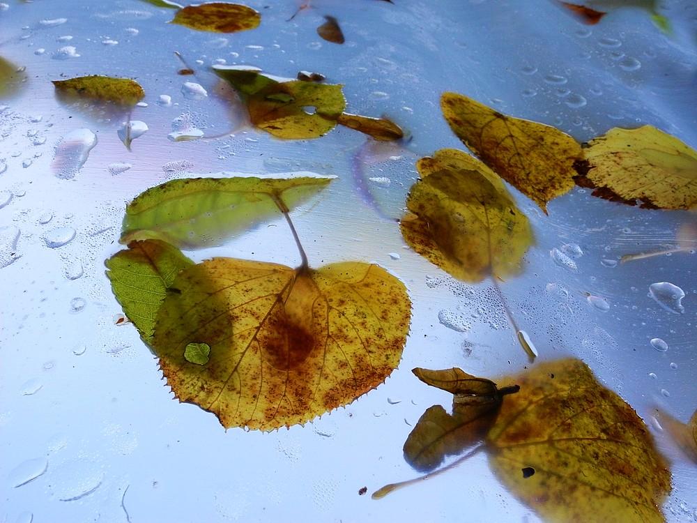Herbstlicher Blattfall . . .