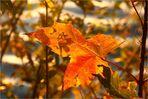 Herbstlicher Blattsalat (5)