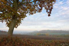 Herbstlicher Blick nach Homberg
