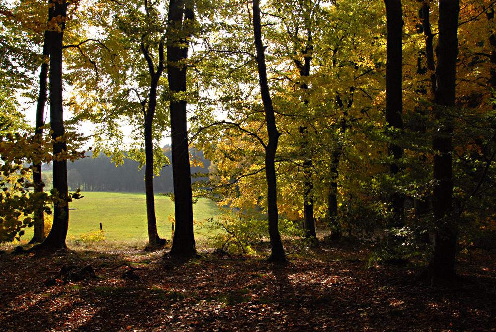 Herbstlicher Durchblick