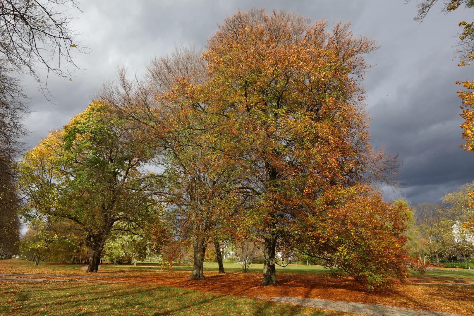 Herbstlicher Georgengarten