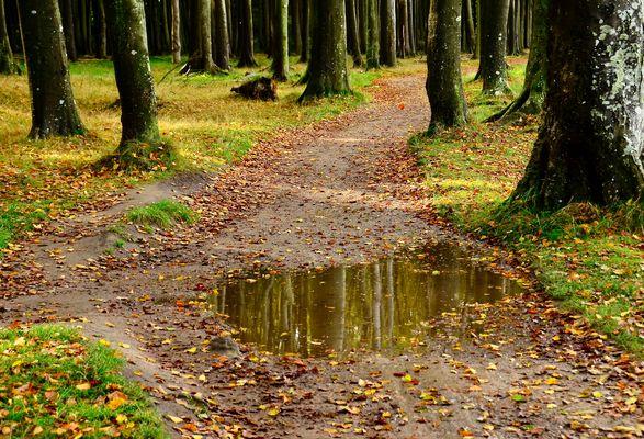 herbstlicher Gespensterwald