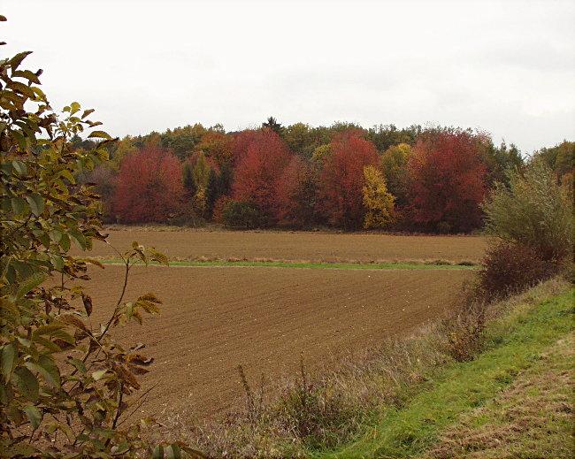 Herbstlicher Haßgau ...