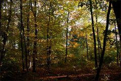 Herbstlicher Kottenforst