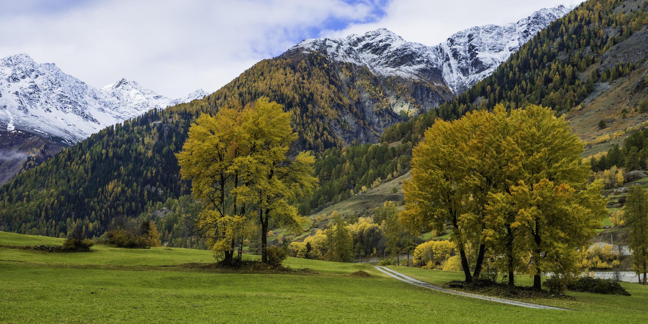 Herbstlicher Laubbaumtraum - I