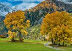 Herbstlicher Laubbaumtraum - II