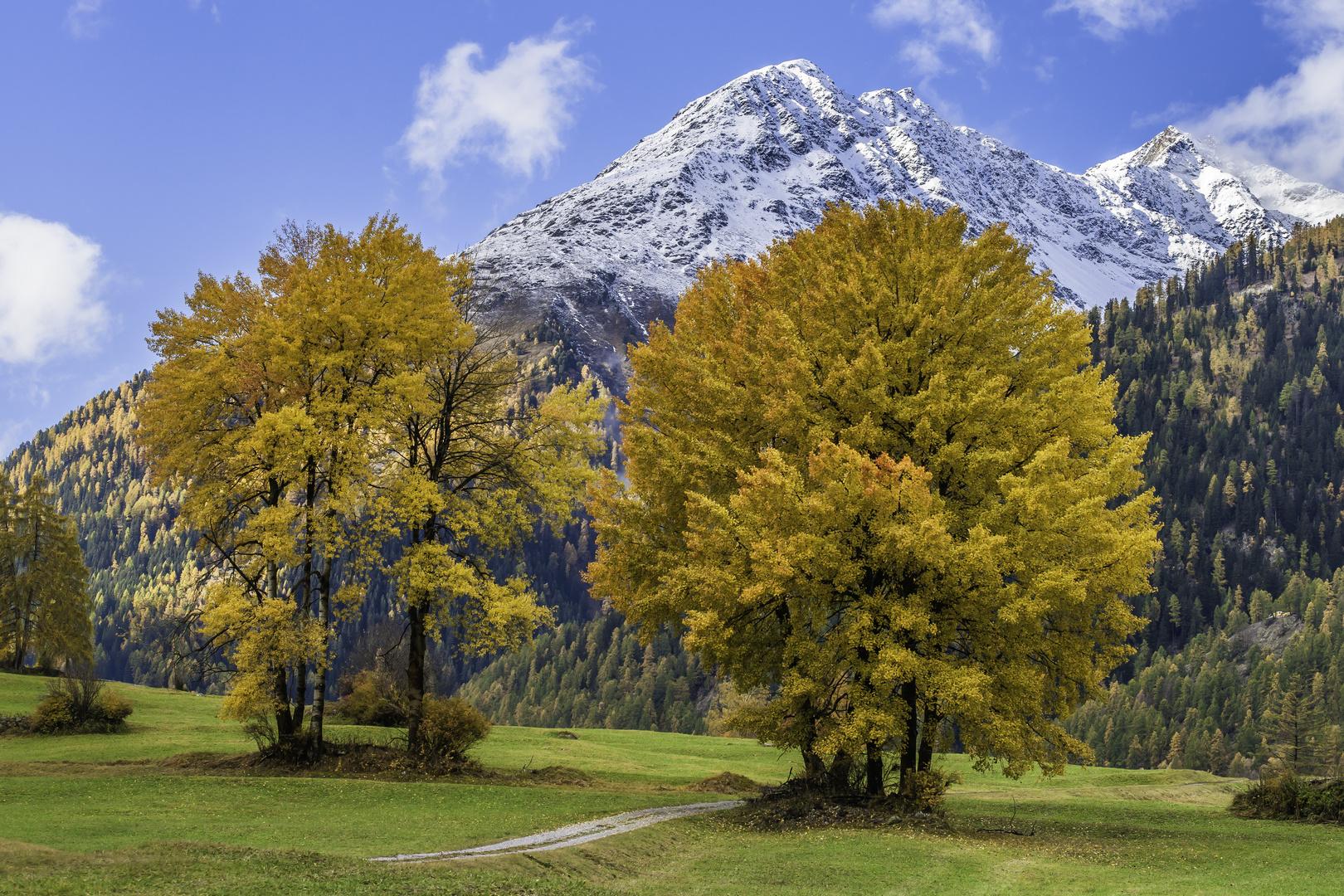 Herbstlicher Laubbaumtraum - IV