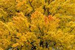 Herbstlicher Laubbaumtraum - V