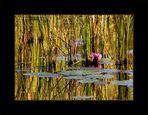 Herbstlicher Moorweiher