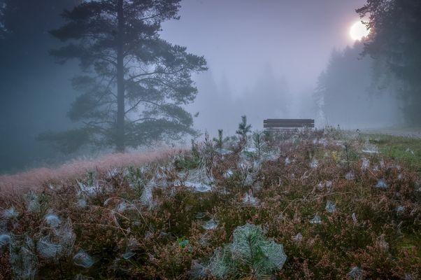 Herbstlicher Morgen