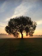 Herbstlicher Morgenspaziergang II