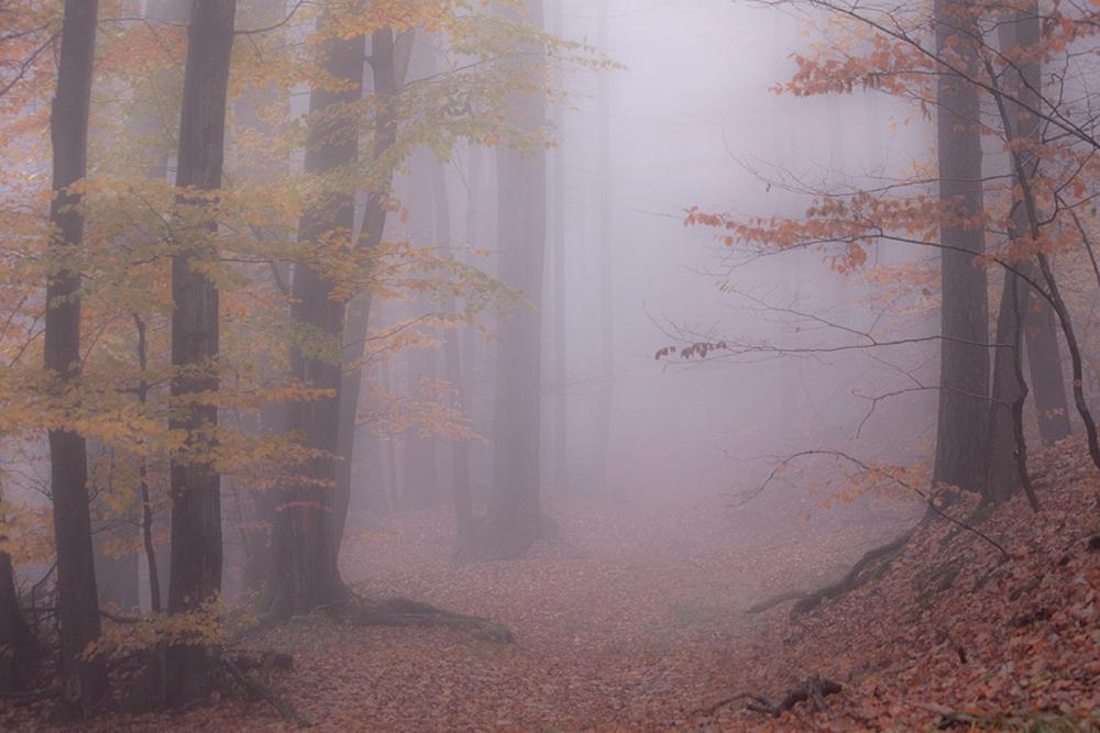 Herbstlicher [Oden]Wald