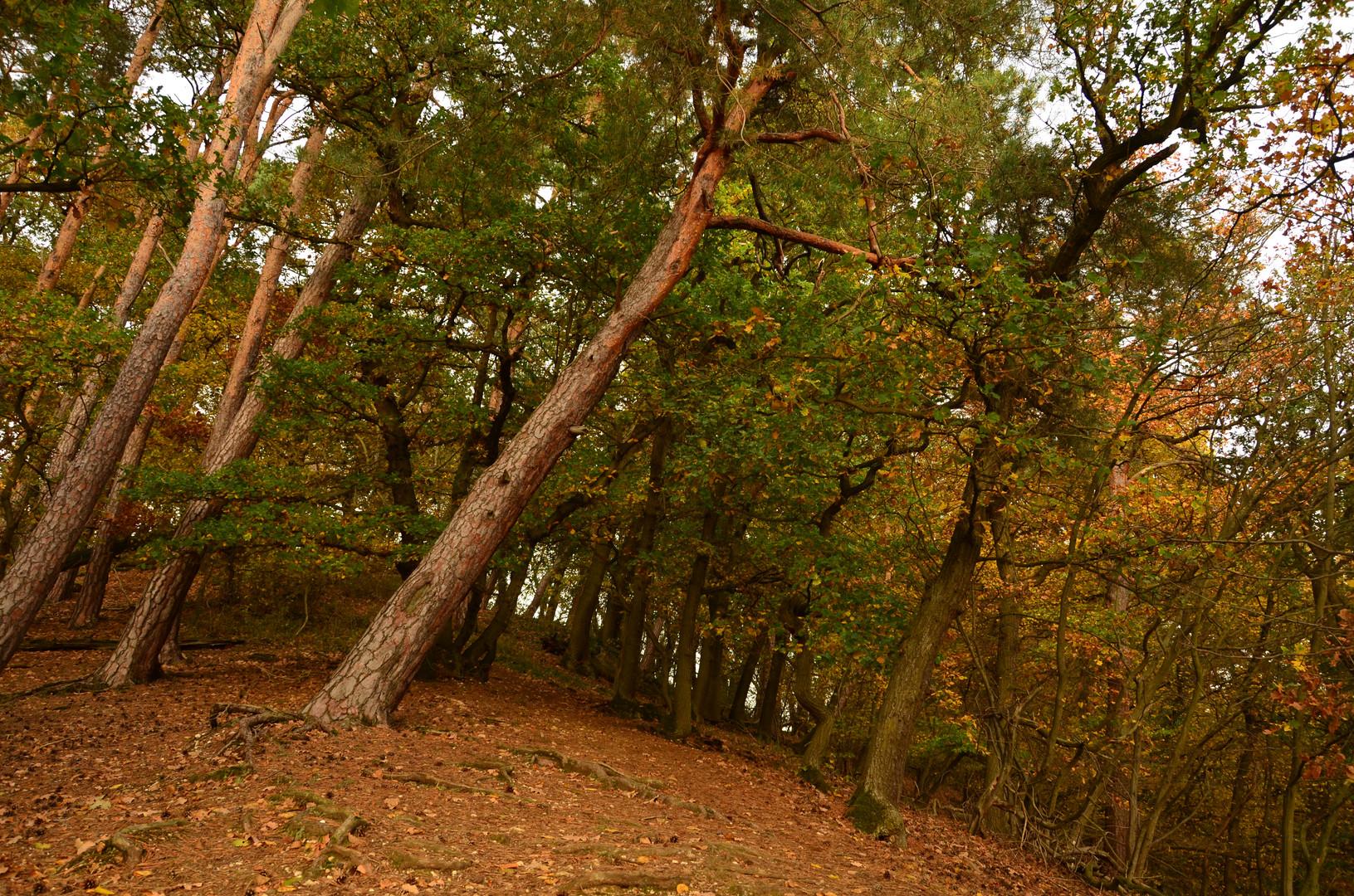 Herbstlicher Oktoberwald