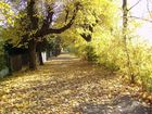 Herbstlicher Park