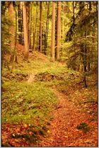 Herbstlicher Regenwald