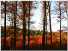 Herbstlicher Sackwald