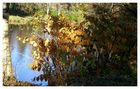Herbstlicher Seeblick