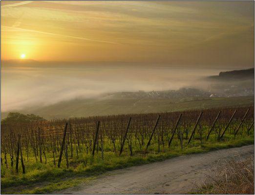 Herbstlicher Sonnenaufgang am Oberrhein