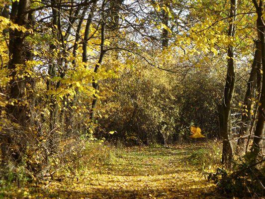 Herbstlicher Spaziergang im Wald bei Nürnberg
