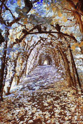 Herbstlicher Tunnel (IR)