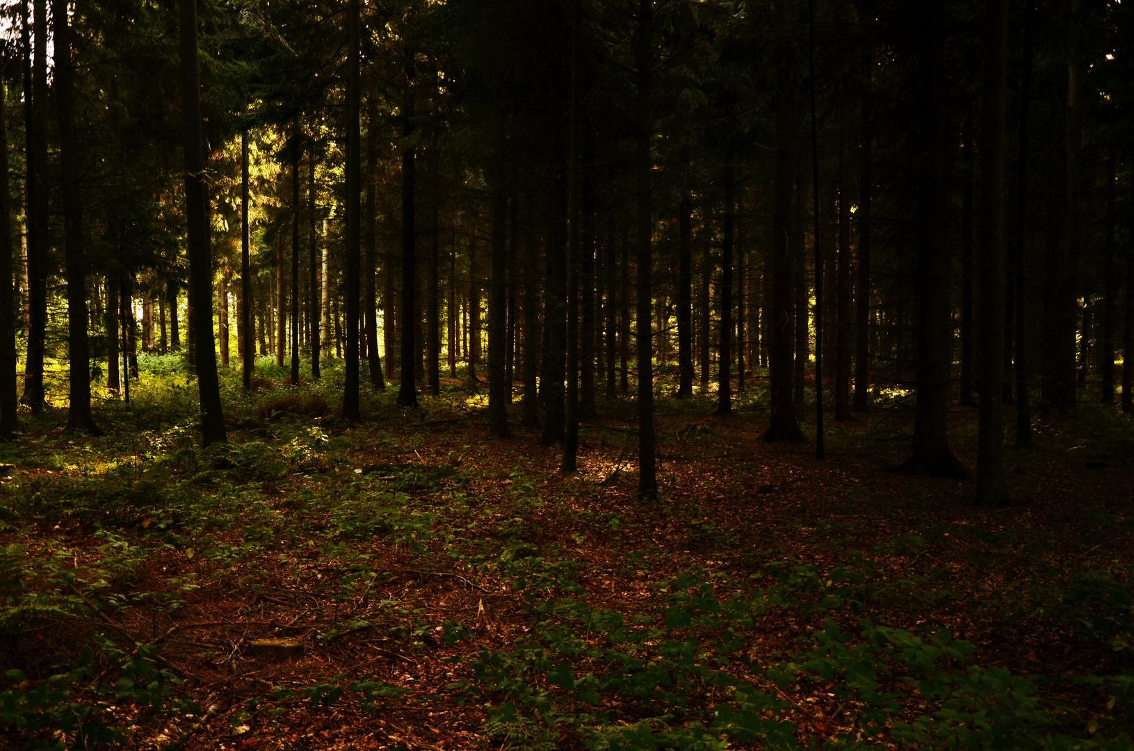 Herbstlicher Wald ..