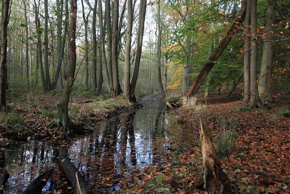 Herbstlicher Wald im Naturschutzgebiet Lanken