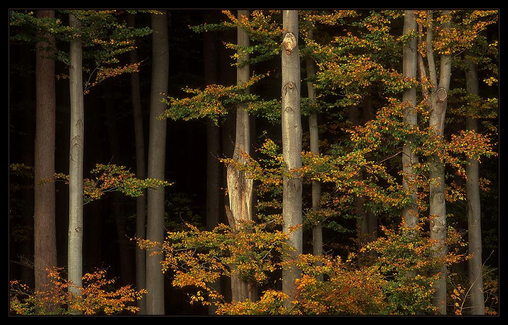 Herbstlicher Waldrand I